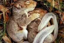 Sleeping Animals Photography