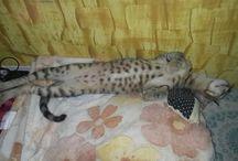 cuteeee catty / Animals cruelty