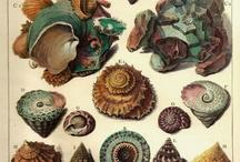 kagylók,csigák