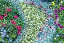 kert, virágok