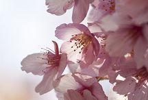 Centros de flores y flores