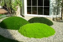 Moss gardens and projects