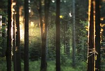 photo references -forests