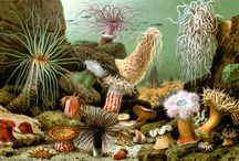 ~~~ Sea Anemone ~~~