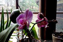 Λουλούδια & φυτά