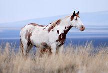 Medicine Mustang
