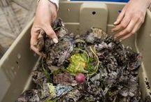 Compost lombricultura