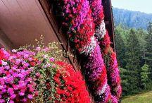 Kvetinaaa