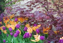 TOPIARIUS Fall Planting Bulbs