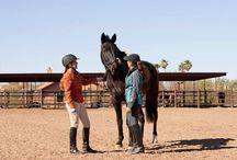 Horse - rider