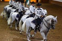 Andalusian Riding School