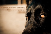 DOGS / by Emelie Lesher