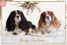 kerst / Allerlei leuke kerst dieren