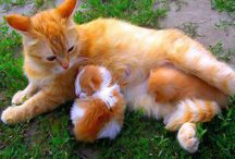 Adorable Animals pics / Animals everything related to animals