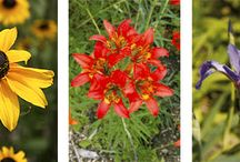 gardening in the prairies / Gardening and landscaping inspiration for zone 3 and zone 4.