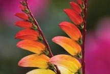 Plants I want! / by Geoffrey Wakeling