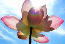 loto multicolor