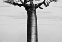 tree motif