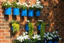 Gardening/Outdoor Living / by Jody MacMullen