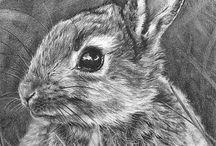 ~ WilDILIFE -ANIMALS ~ PENCIL~
