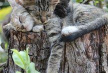 Katten, cats / by Marianne Temming