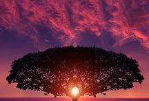 Stunning images