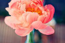 Flowers / by Ruby Dekker-Wu