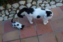 søte kattee