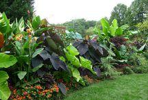 Amy Joyce / Tropical garden ideas amy likes