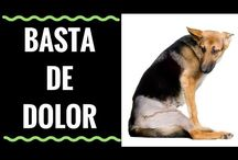 previcox antiflamatorio p/ perros.