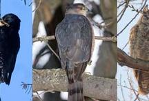 Birds in my backyard / by Sarah Herbert