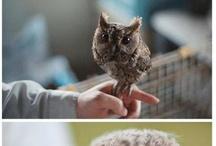 owls / by Janelle Hagelin