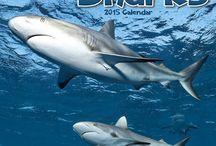 2015 Sharks Calendar