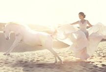 Sand horse shoot
