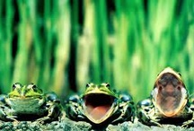 Frogs / by Barb Brown