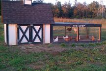 Chickens... all the stuff