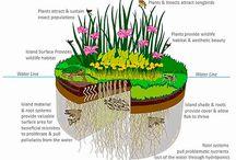 floating plant islands