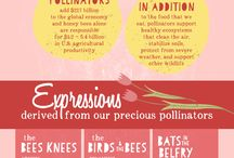 Wildflowers & Pollinators - A Match Made by Mother Nature / Wildflowers grow pollinators!