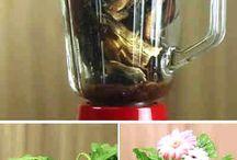 plantas & remedios plantas