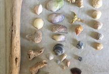 Beach combing finds