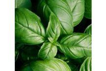 Semillas aromáticas / Las mejores plantas aromáticas para la huerta y el jardín