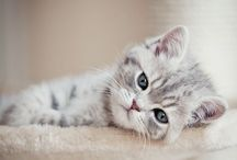 cats / ❤❤❤