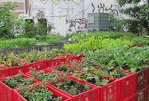 Crates / Planting idea