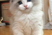 I want a cat / Cute cats  / by Ruthie