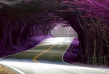 Color Purple...Love Love Love this / by Christine Campbell