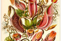 식충식물 2