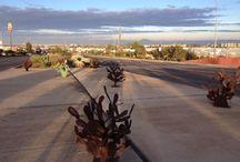 cactus: wide bay high desert