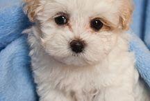 So fluffy I'm gonna die!!