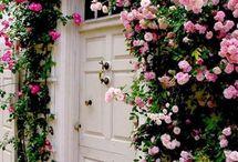 mio giardino