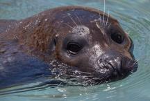 Kovler Sea Lion Pool